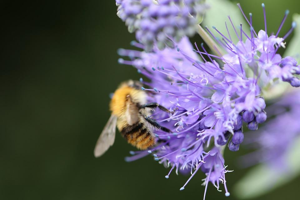 Bee Friend, Bees, Tufted Flower, Bueschelschoen