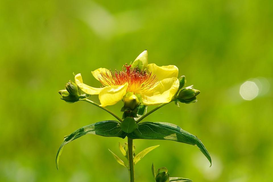 Bee, Butterfly, Flower, Insect, Nature, Grass, Garden