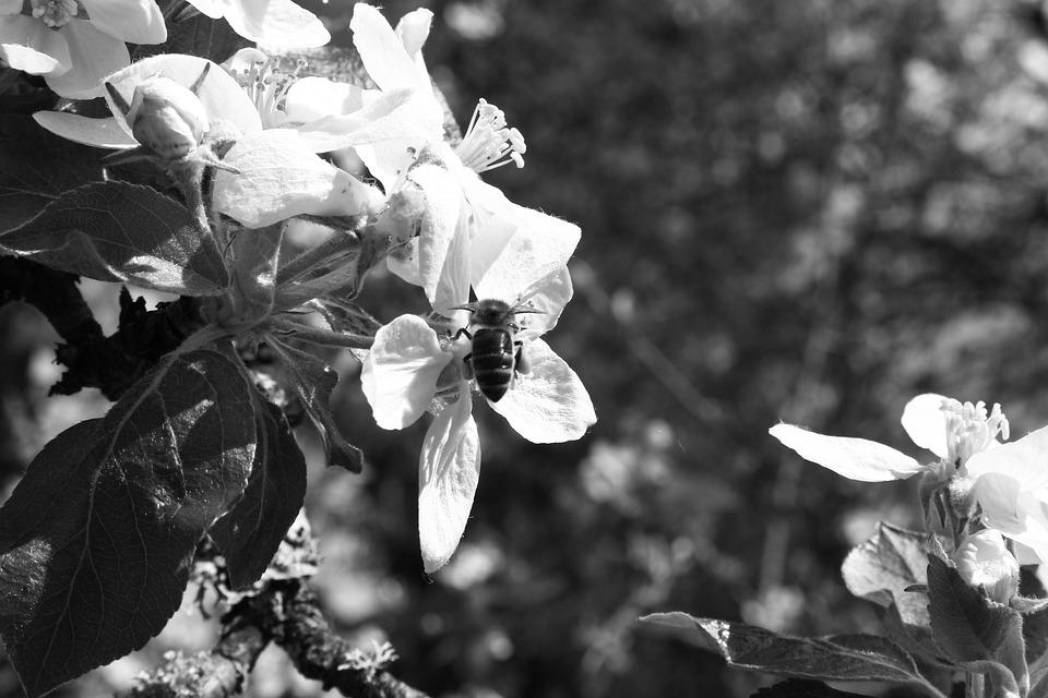 Flower, Insect, Nature, Bee, Garden, Spring