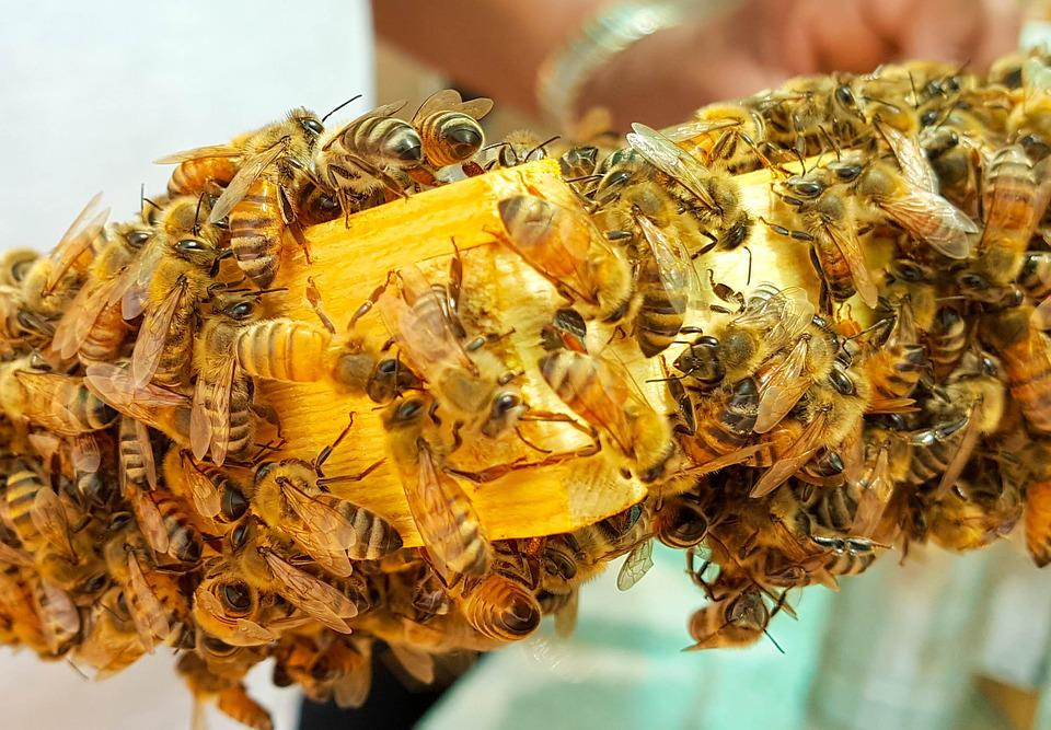 Bee, Bees, Honey, Honeybees, Wax, Hive, Frame, Closeup