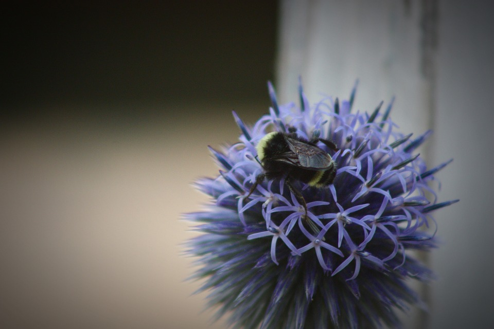 Bee, Flower, Nature, Garden, Insect, Plant