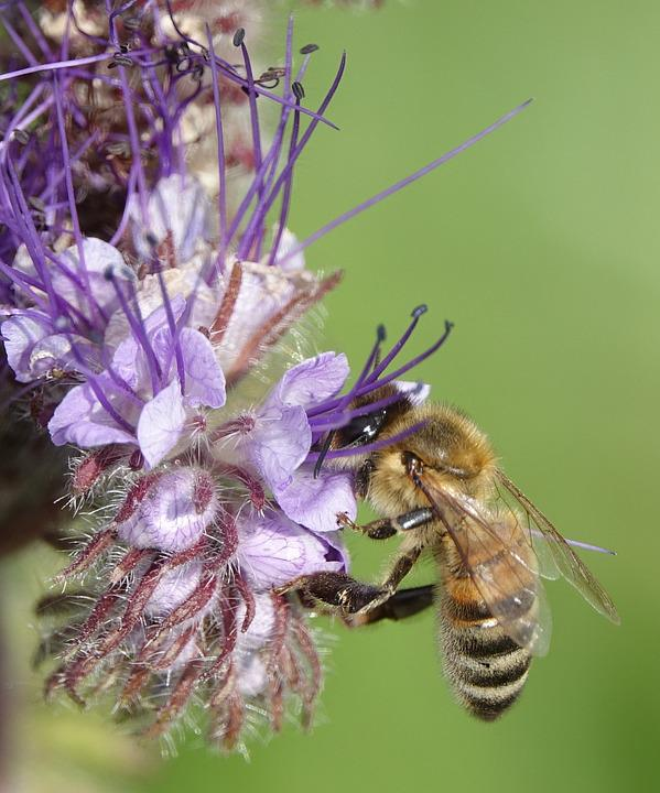 Bee, Insect, Nature, Honey