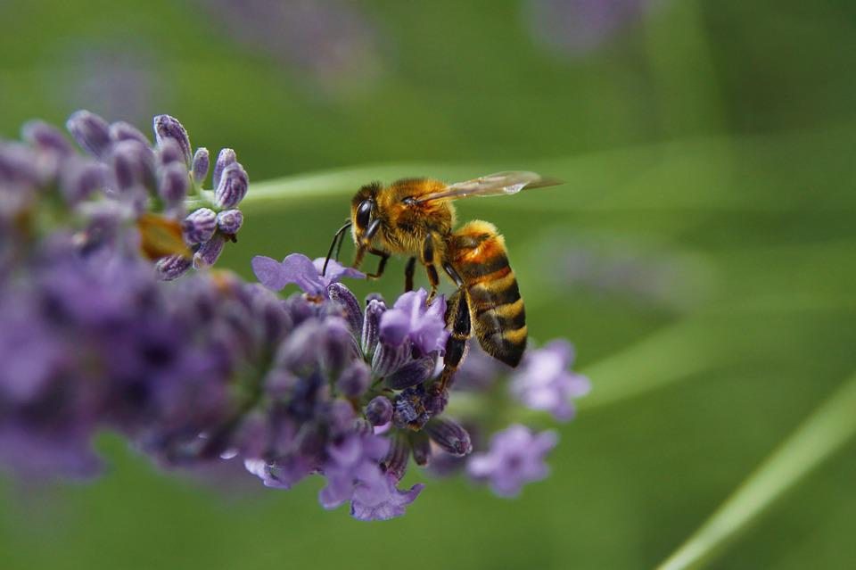 Bee, Pollination, Pollen, Insect, Macro, Yellow