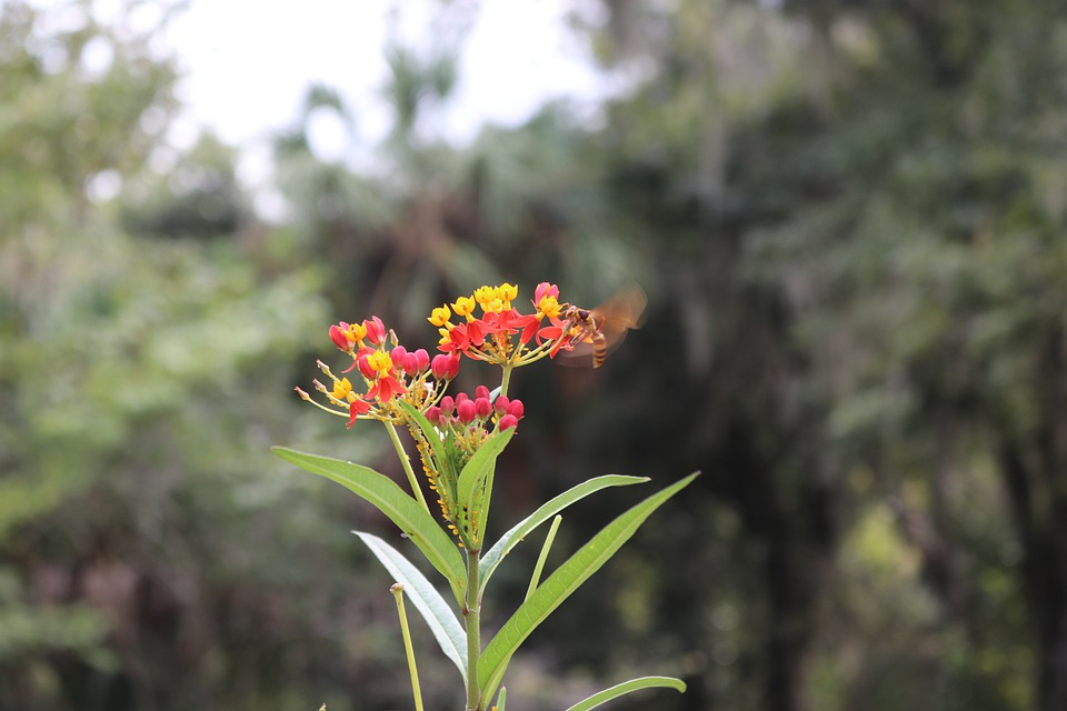 Flower, Nature, Bee