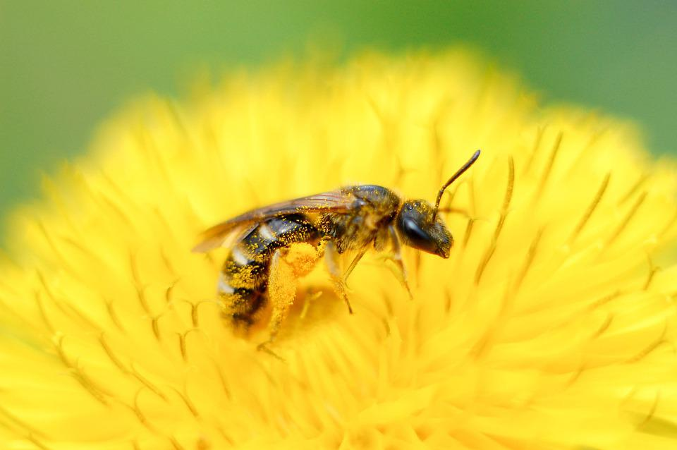 Nature, Insect, No One, Bee, Outdoors, Animals