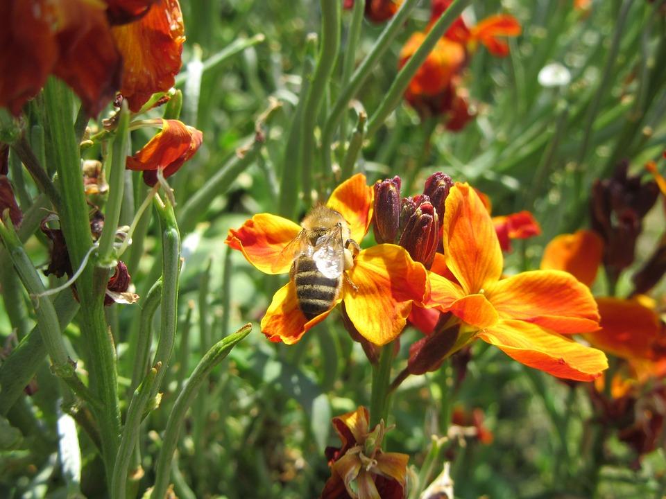 Flowers, Orange, Bee
