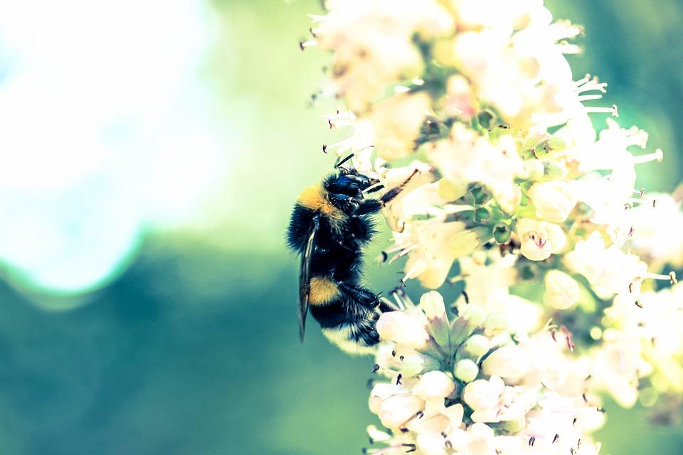 Life, Beauty, Scene, Nature, Bee, Pollinate, Buzz