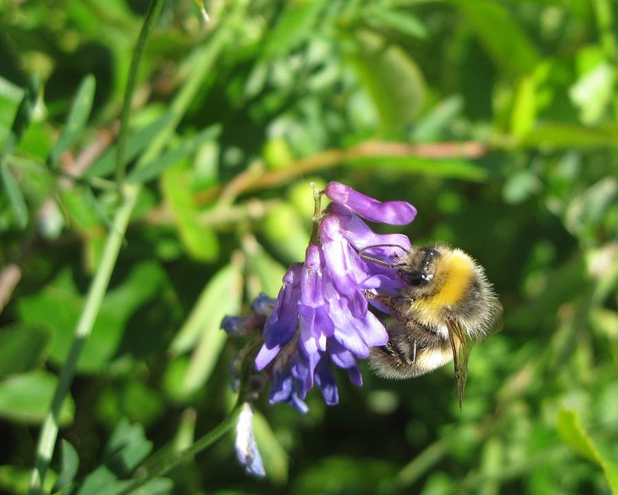 Summer, Flower, Bee, Close-up