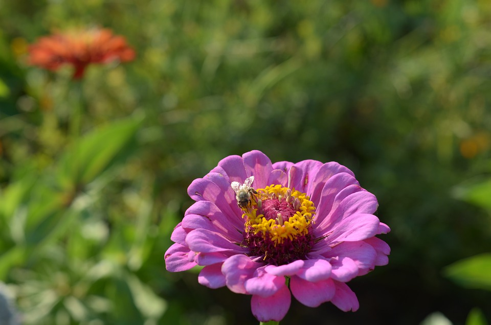 Floral, Bee, Flower, Nature, Summer, Insect, Pink