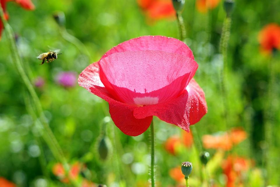 Bee, Flower, Summer, Bocker, Morning, Beautiful, Green