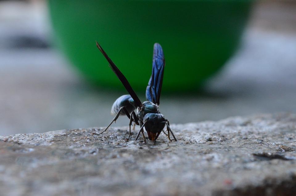 Bee, Wasp, Animal, Tweezers, Wings