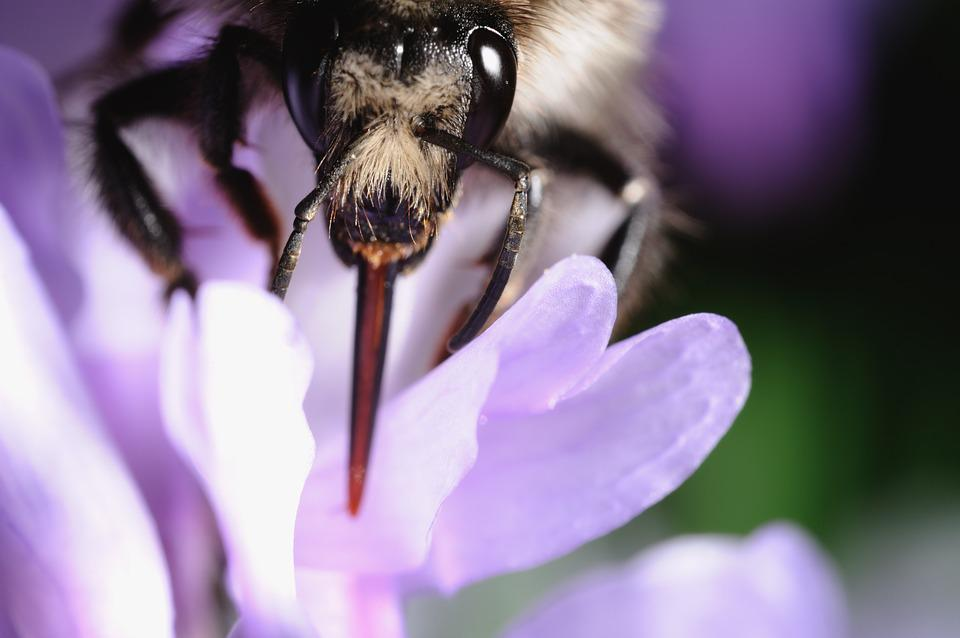 Bee, Flower, Pollination, Life, Purple, White, Close-up