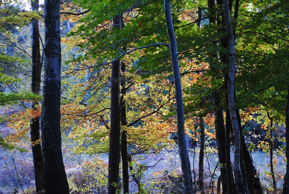 Burnham, Beeches, Trees, Autumn, Leaves, Season, Forest