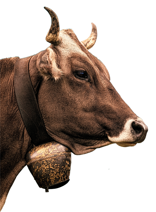 Cow, Milk, Beef, Animal, Agriculture, Cattle, Ruminant