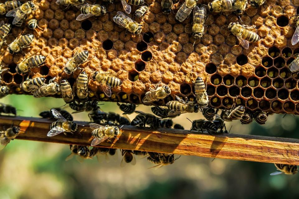 Apiary, Bee, Beehive, Beekeeping, Beeswax, Close-up