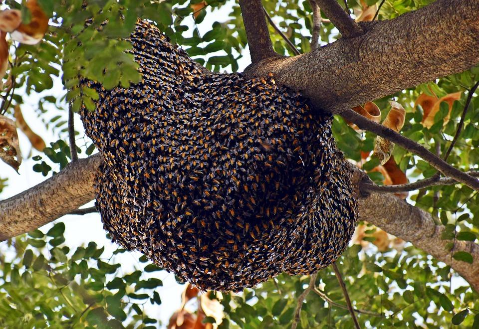 Beehive, Honeybees, Bee, Beekeeper, Beekeeping, Hive