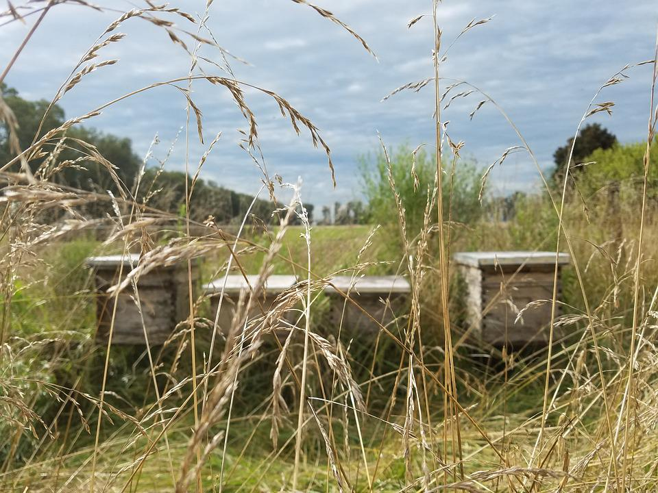 Beekeeping, Bees, Field