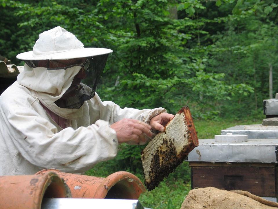 Bees, Beekeeping, Honey, Beekeeper, Apiary, Beegarden