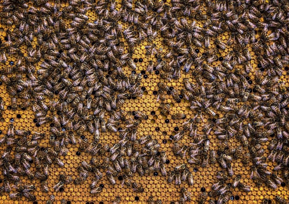 Beehive, Bee, Honeycomb, Beekeeping, Wax, Insect