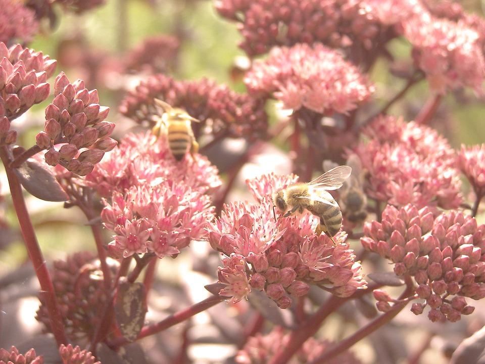 Flowers, Nature, Meadow, Pink, Garden, Bees
