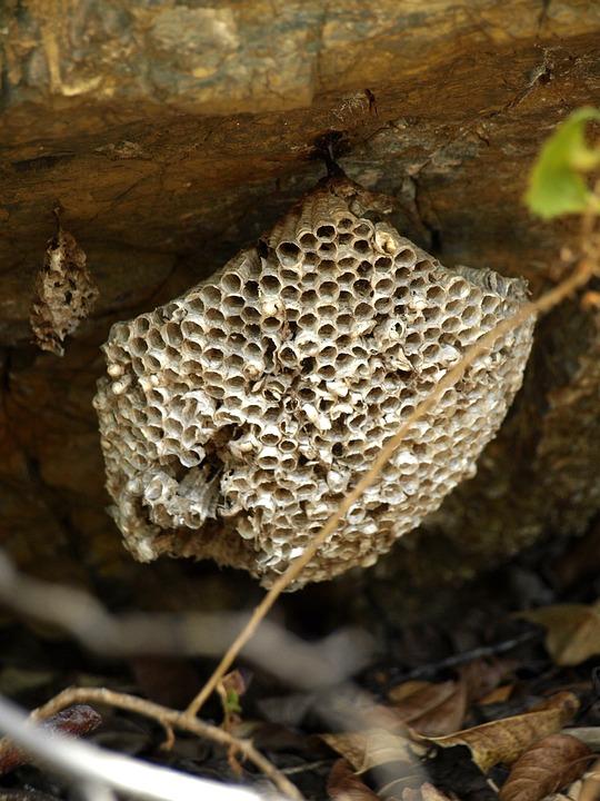 Beehive, Honeycomb, Bee's Nest, Honeycomb Structure