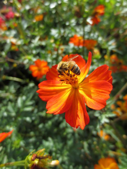 Bee, Honey Bee, Honey, Bees, Insect, Nature, Spring