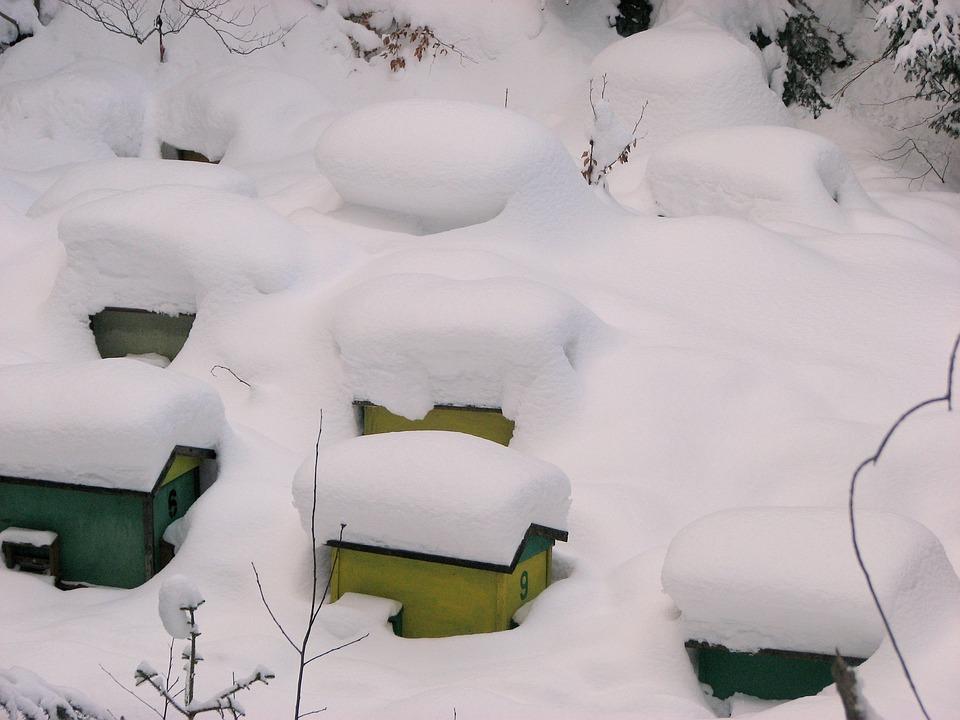 Ul, Ule, Winter, Snow, Bee, Bees, Pasieka, White