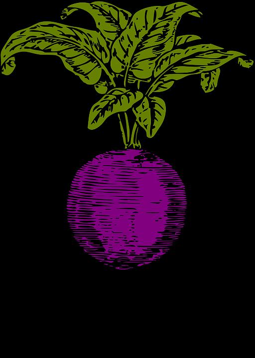 Beet, Beetroot, Purple Beet, Vegetables