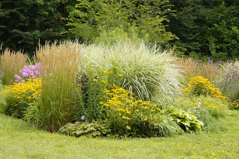 Botanical Garden, Botany, Planted, Beete, Perennials