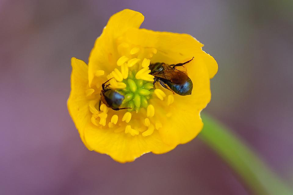 Spring, Insect, Beetle, Nature, Garden, Bloom, Blossom