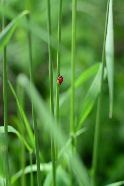 Ladybug, Green, Nature, Leaf, Leaves, Insect, Beetle