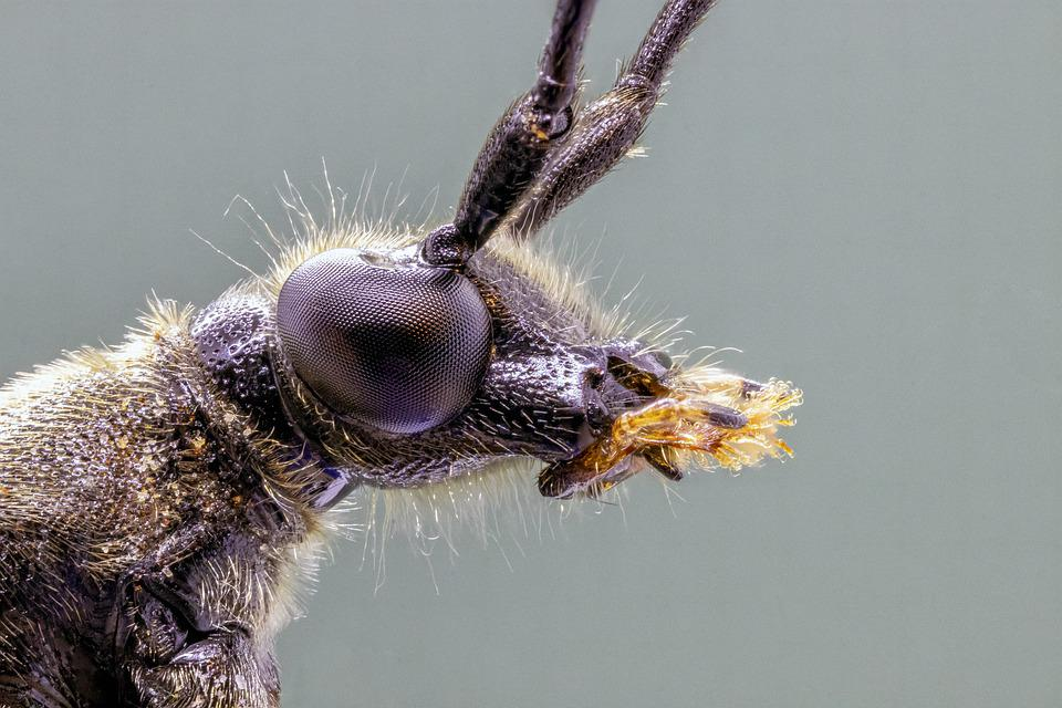 Spotted-longhorn, Beetle, Close, Macro, Tiny, Nature