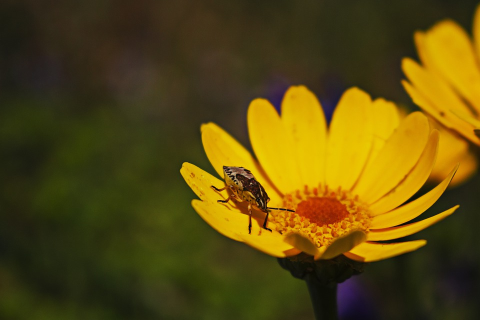 Insect, Bug, Beetle, Flower, Petals, Green, Bloom