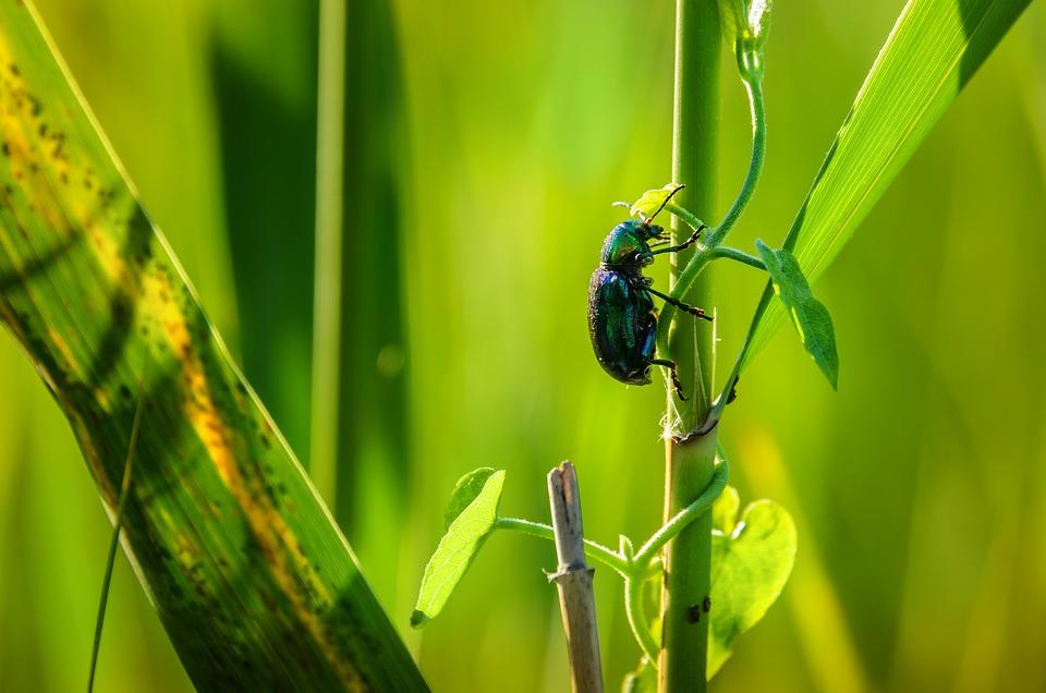 Alone, Animals, Beetles, Insect, Invertebrates, Jewel