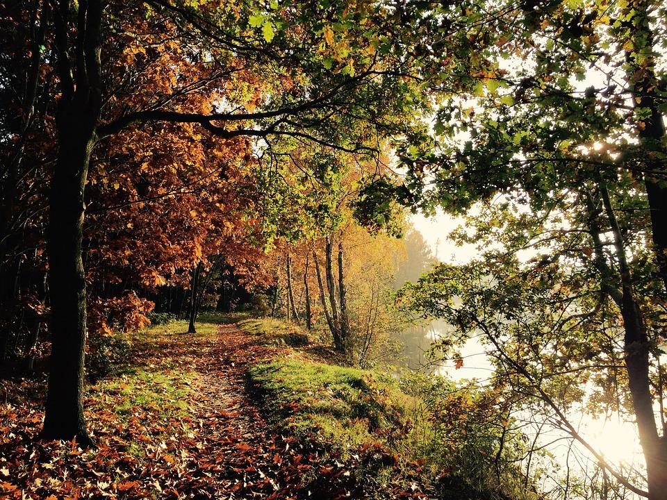 Nature, Autumn Mood, Beginning Of Autumn, Forest, Lake