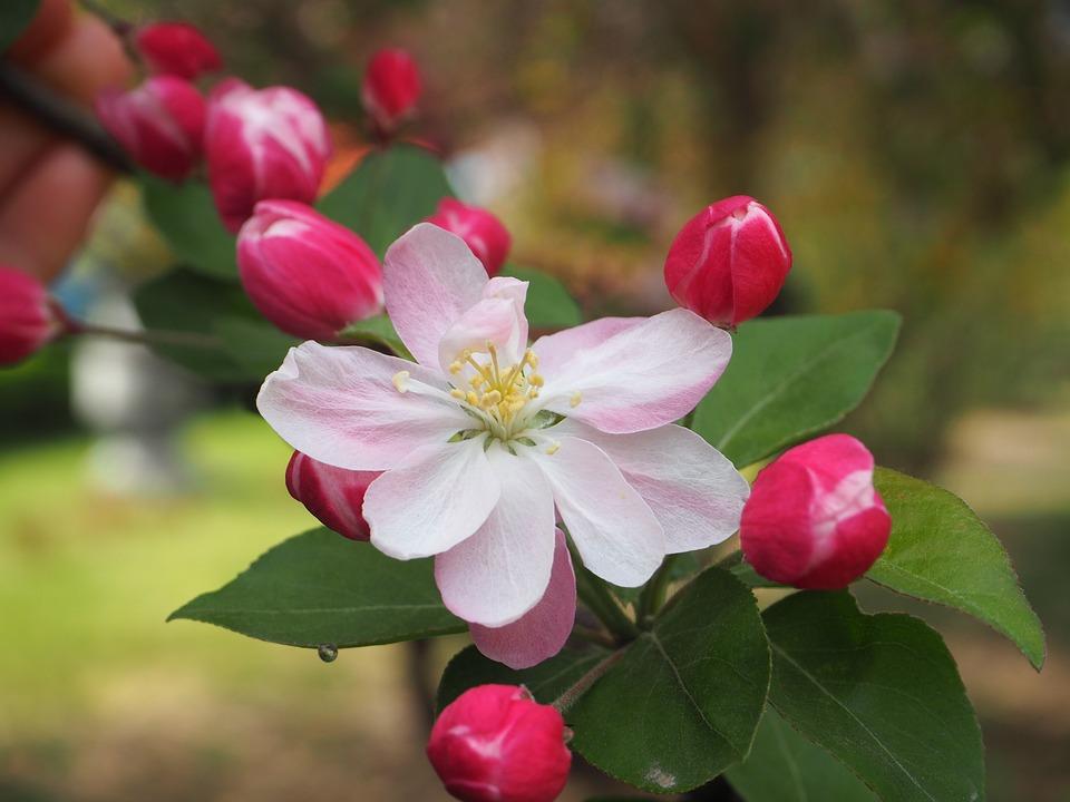 Begonia Flower, Spring, Campus