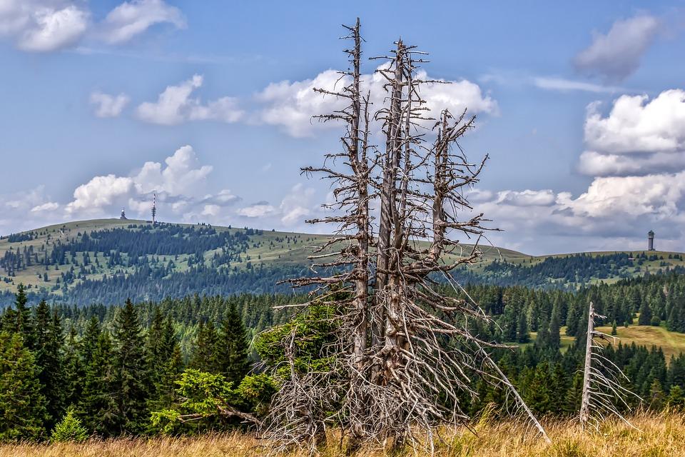 Feldberg, Belchen, Black Forest, Outlook, View, Conifer