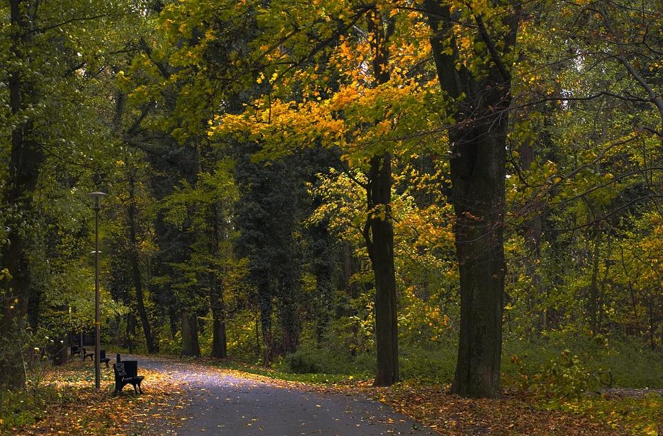 Park, Bench, Autumn, Nature, Quiet, Tree, Romantic