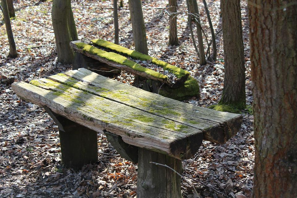 Wooden Bench, Forest, Bench, Bank, Wood, Nature, Rest