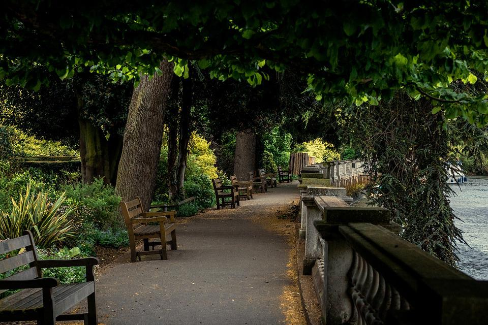 Tree, Nature, Wood, Bench, Garden, Outdoors, Flora
