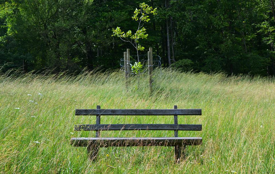 Park Bench, Grass, Sit, Wind, Bench, Wooden Bench, Bank