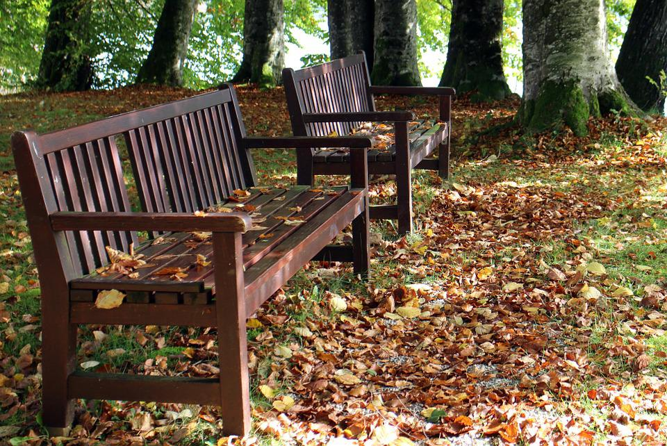 Autumn, Bench, Seat, Nature, Rest, Out, Wood, Bank