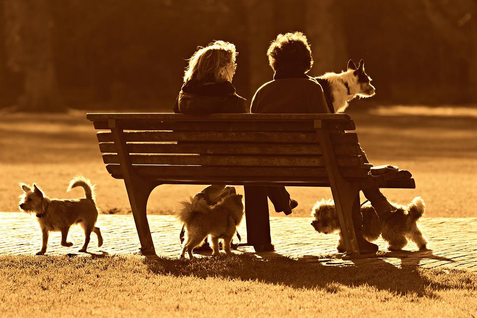 People, Woman, Sitting, Two, Together, Bench