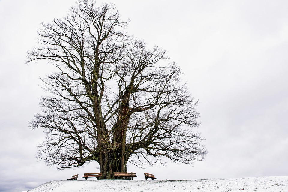 Winter, Tree, Benches, Old Tree, Branches