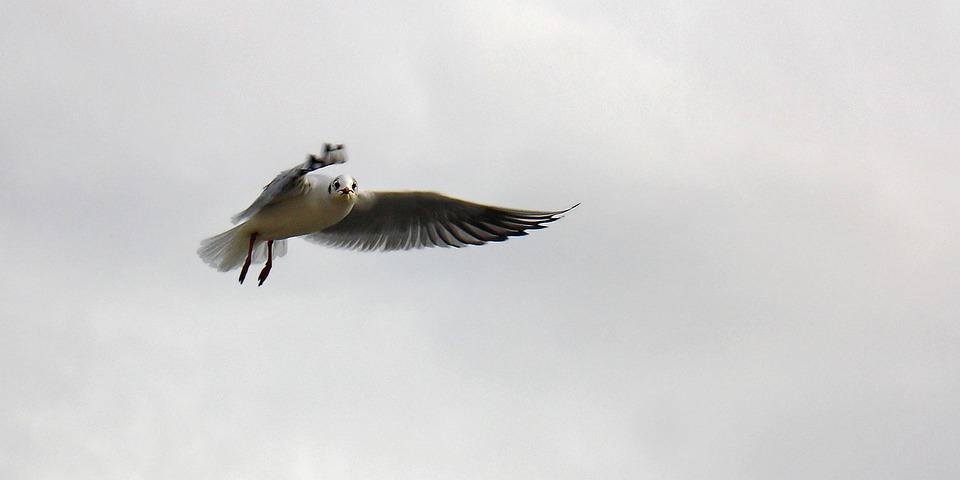 Gull, Birds, Berlin