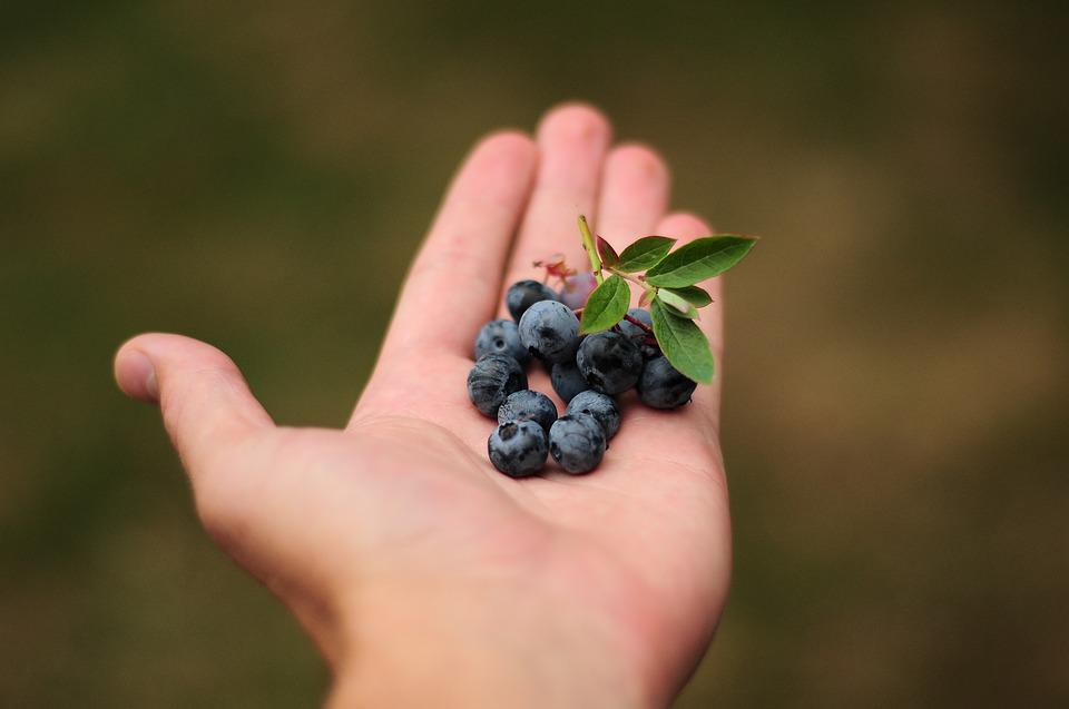 Blueberries, Blue, Berries, Hand, Holding Food, Food