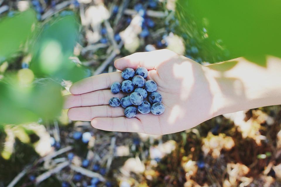 Berries, Field, Food, Fresh, Fruits, Hand