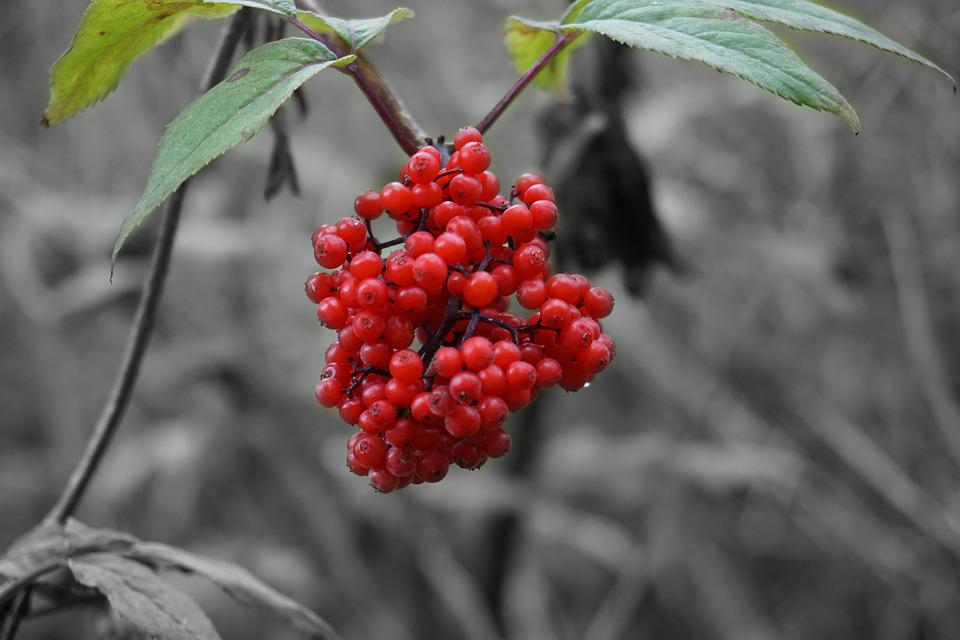 Nature, Berries, Summer, Forest, Close Up, Autumn