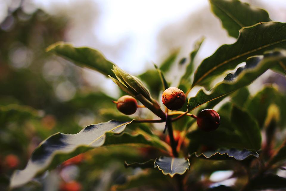 Berries, Nature, Berry, Natural, Plant, Leaf, Color