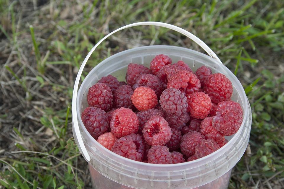 Raspberry, Berry, Berries Of A Raspberry